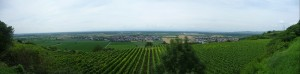 A vineyard at the famous Tuniberg in the Upper Rhine Graben.