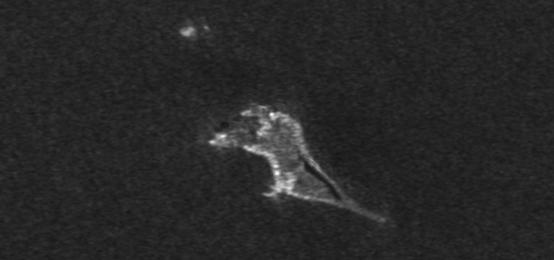 Image of Bogoslof Island before 2016 eruptsions